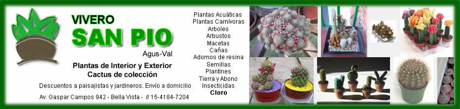 Vivero san pio plantas y flores guia de bella vista y for Vivero a domicilio